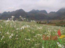 Spring in the North of Vietnam